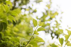 Green leaves on the tree in nature Stock Photos