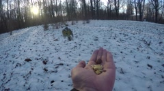 Tits eat nuts with hand in winter Stock Footage