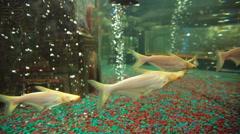 Fishes at aquarium Stock Footage