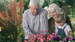 Elderly Couple and Girl Looking at Blooming Flowers Stock Footage
