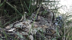 Sniper hiding in grass Stock Footage