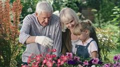 Elderly Couple and Little Girl in Garden Stock Footage