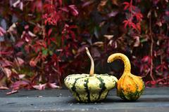 Autumn yellow pumpkin on a wooden table Stock Photos