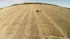 Fly over the wheat field after harvesting Stock Footage