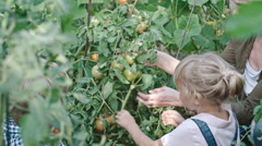 Children Picking Ripe Tomatoes with Grandmother Stock Footage