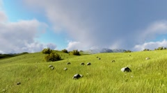 Aerial View. Landscape a green grassy rocky hills. FullHD Stock Footage