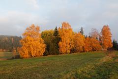 Colorful autumn trees Stock Photos