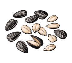 Whole and peeled sunflower seeds isolated on white background Stock Illustration