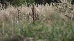 Detail A soldier search for mines in field Stock Footage