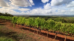 Vineyard landscape in autumn Stock Footage
