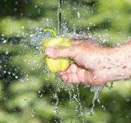 Paprika in hand in water Nature Stock Photos