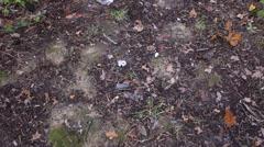 Garbage thrown in the woods. Garbage dump. Stock Footage