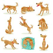 Brown Dog Set Of Normal Activities Stock Illustration