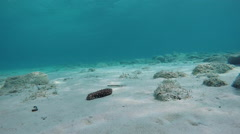 A sea cucumber underwater on sandy seafloor on sunny day in Aegean sea in Greece Stock Footage