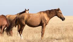 A horse in a pasture in the desert Stock Photos