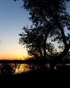 Tree silhouette on the river on a sunset background Stock Photos