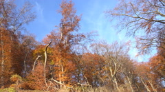 4k Sunny golden autumn mountain range forest low angle panning Stock Footage