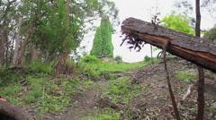 Teenage boy mountain biking in a forest, slow motion. Stock Footage