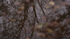The girl goes through a puddle  which reflects leafless autumn trees Stock Footage