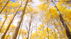 Clouds over Aspen trees Stock Footage