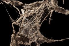 Cobweb or spider web isolated on black background Kuvituskuvat