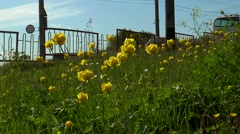 Bright yellow flowers on a background of moving cars. Stock Footage