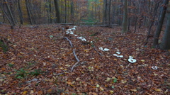 4k White fairy ring mushrooms tilt up in autumn mountain range forest hills Stock Footage