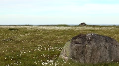 Plain tundra. Northern white fluffy plants and large stones. Stock Footage