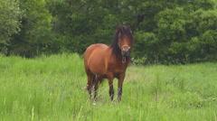 Horse on field Stock Footage