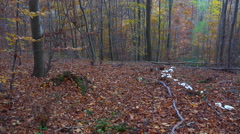 4k White fairy ring mushrooms panning in autumn mountain range forest hills Stock Footage