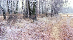 Woodland edge of the forest Stock Footage