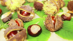 Horse chestnut: seeds and leaves Stock Footage