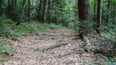 The wood in mountains, shooting in the summer.  Stock Footage
