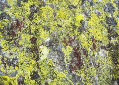 Stone with lichen (background). Stock Photos