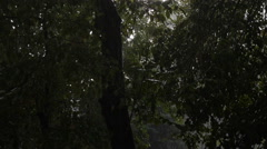 Outside the Window is a Heavy Downpour, Wind Shakes the Trees Stock Footage