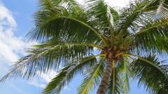 Coconut palm tree on Beautiful Tropical beach  Stock Footage