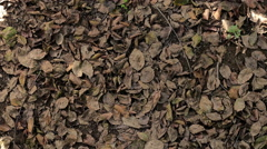 happy  and serene man stretches of carpet of leaves Stock Footage