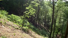 Panorama horizontally in a young beech forest with trees and vegetation altho Stock Footage