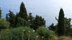 View over a forest of cypresses raised on the Aegean coast  Stock Footage