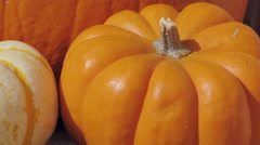 Macro Dolly Out from Fall Pumpkins Stock Footage