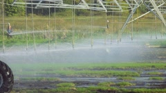 Automated farm irrigation system with drop sprinklers at field Stock Footage