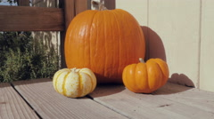 Dolly Out from Fall Pumpkins Stock Footage