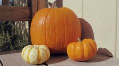 Dolly In Towards Fall Pumpkins Stock Footage