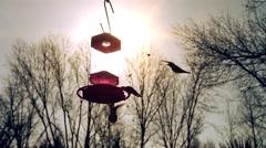 Hummingbirds At Sunset Stock Footage