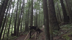 A wooden ramp for mountain bikers in a forest on a mountain, super slow motion. Stock Footage