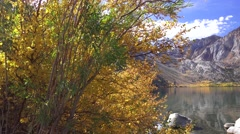 Convict Lake, Sierra Nevada golden leaves Stock Footage