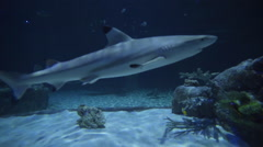 Closeup Of Blacktip Shark And Other Marine Life Swimming Past Camera In Aquarium Stock Footage