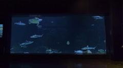 Marine Life Swim Around In Huge Oceanarium Tank Stock Footage