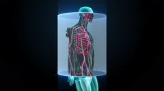 Scanning blood vessel in male body. X-ray view Stock Footage