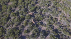 Hoovering male deers in the smoothness, top view Stock Footage